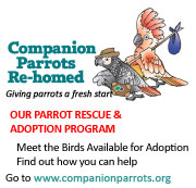 Companion Parrots Re-homed