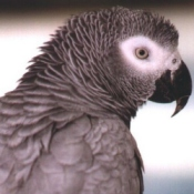 Parrot University - It's About The Birds - Home Page